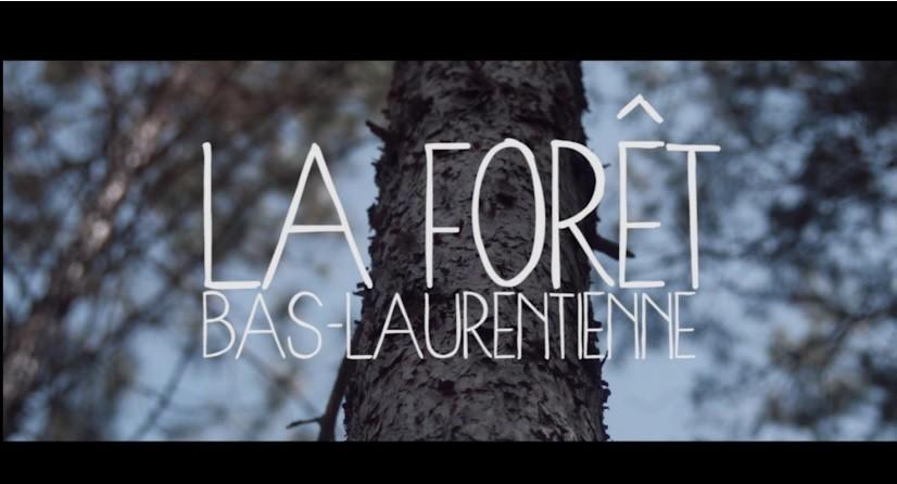 Forêt Bas-Laurentienne (Auteur : AFBL)