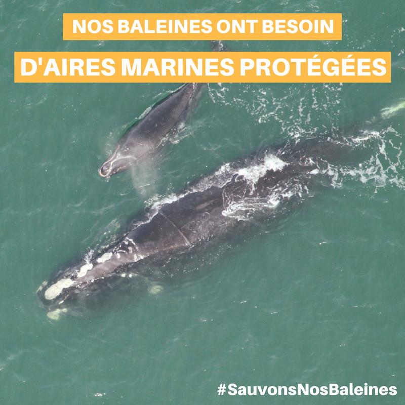 sauvons_nos_baleines_3 (Auteur : CREBSL)