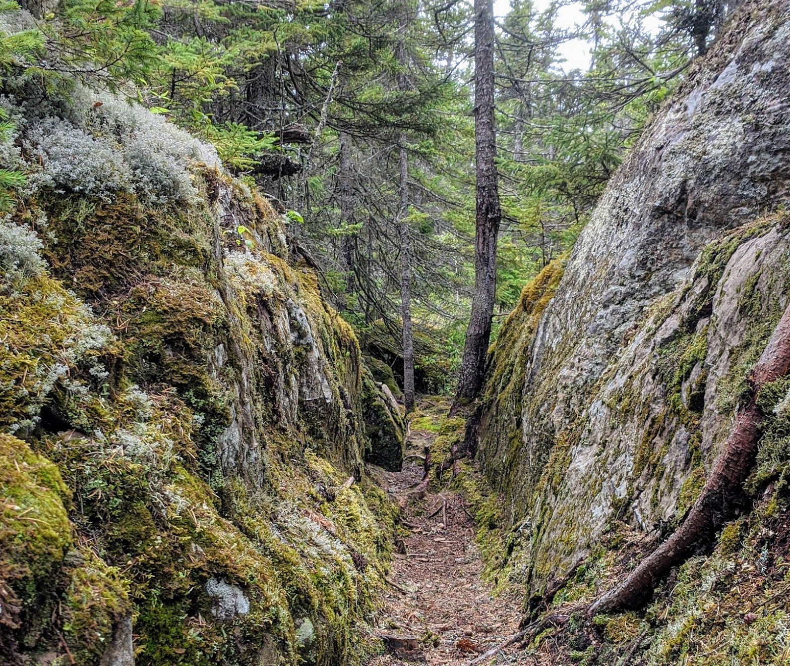 forêt du parc côtier Kiskotuk (CREBSL)